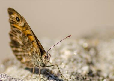 moth-damage